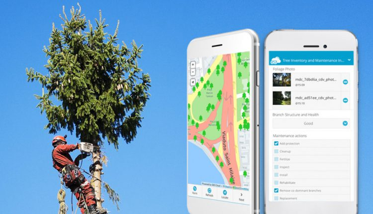 Arborist Software for Better Tree Care Management